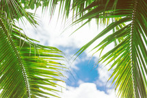palm leaves against a blue sky
