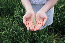 grass seeds in cupped hands