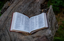 open Bible on a log