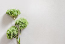 green bush on a white background