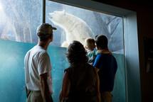 people watching a polar bear at a zoo