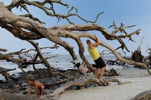 father and son playing in a fallen tree on a beach