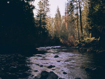 sunlight shining on a river in a forest