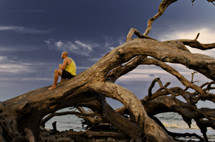 Man sitting on an uprooted tree on the beach.