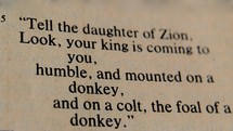 """Tell the daughter of Zion, Look, your king is coming to you, humble, and mounted on a donkey, and on a colt, the foal of a donkey."""