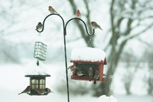 Winter birds gathered at some bird feeders.