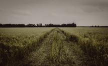 worn path in a field