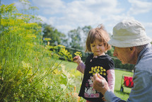 grandfather and granddaughter picking flowers outdoors