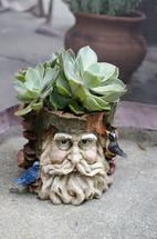 a potted succulent plant