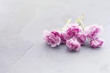 pink flowers on slate