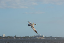 a pelican flying over water