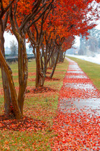 red fall leaves on a sidewalk