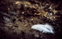 a white feather on a rock