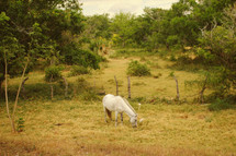 grazing horse in a pasture