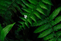 ferns and flower