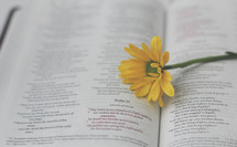 a yellow flower on a Bible, Psalm 21
