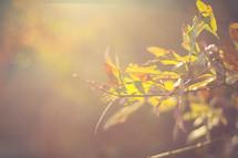 Sunshine on a stem of leaves.