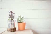 potted succulent plants on a table