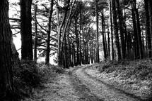 dirt road on rural land