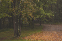 fall leaves and rain on a dirt road