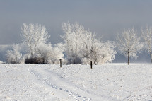 Frozen trees in a winter landscape
