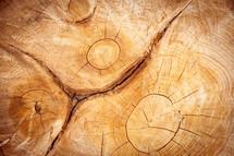 wood grains on tree stump