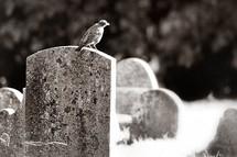 bird on a grave