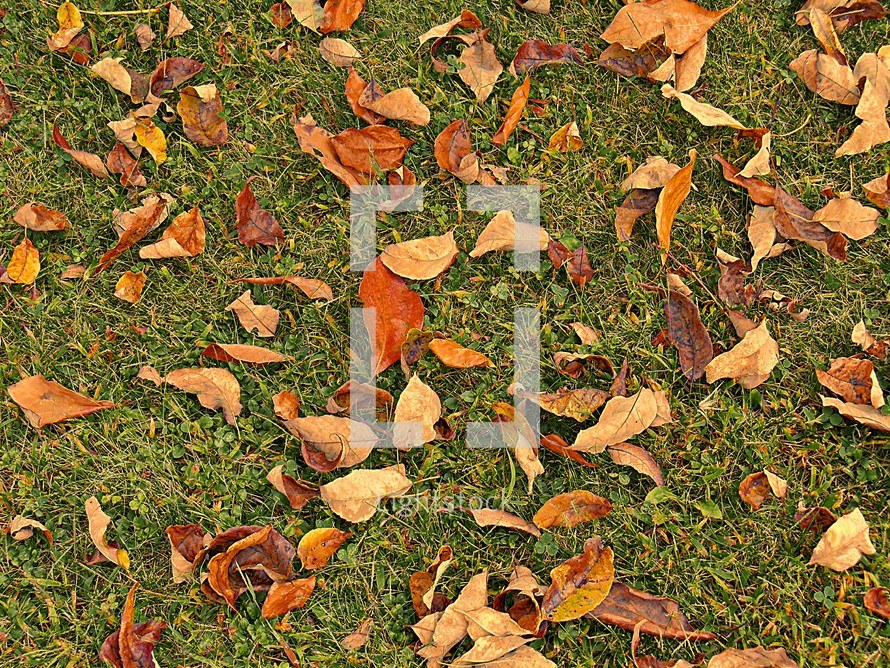Fall leaves on the ground.