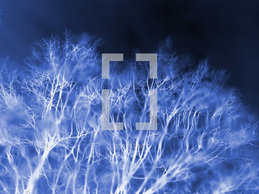 Winter Trees at night time. Great image for wall, winter, Halloween, autumn or seasonal image showing the trees at winter time.