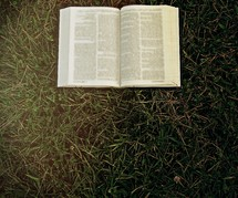 A Bible lying in the grass