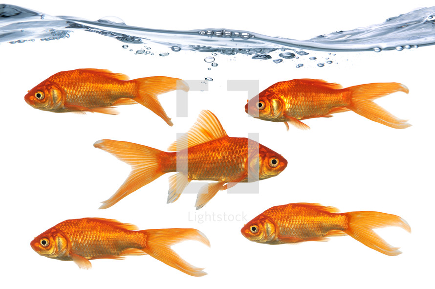 goldfish leader concept - going against the current