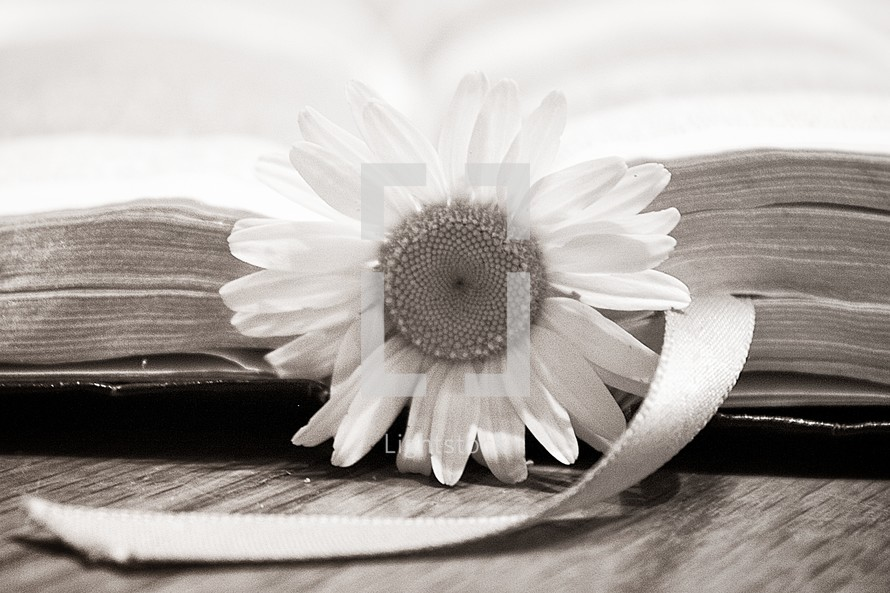 BIble with a flower bookmark