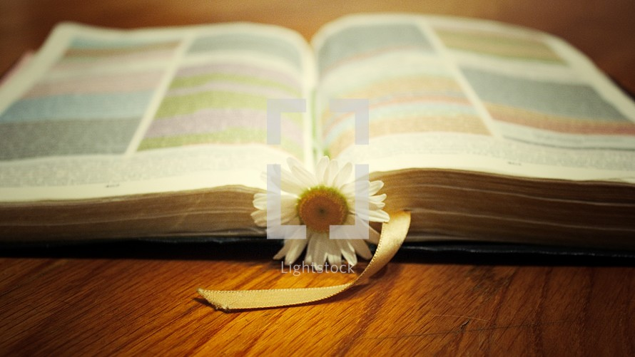 Rainbow Bible and a flower bookmark