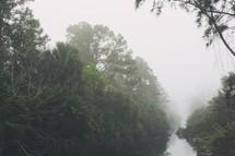 heavy brush cover surrounding a lake