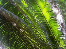 The third day of creation - On day three, God also created vegetation (plants and trees) in Genesis 1: These beautiful palm fronds reflect the sunlight and feed off its light to bring life to the plants and foliage surrounding a tropical forest setting with green plants, trees and sunlight.