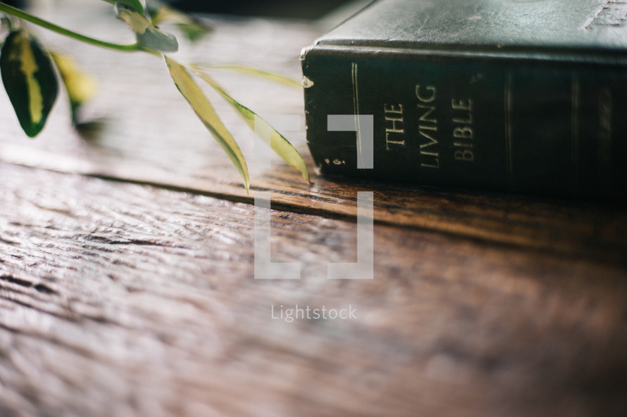The Living Bible on a wood background