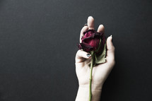 A woman's hand holding a single dying red rose.