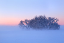 fog around a cluster of winter trees in snow