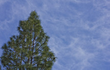 Tree top against a blue sky.