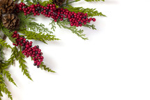 pine and red berries on white background