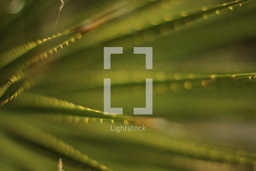 spiky green leaves