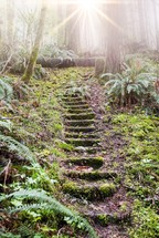 mossy stone steps in a forest