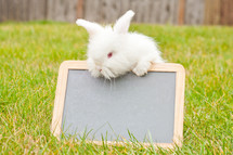 bunny and a chalkboard