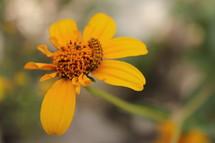 caterpillar on a yellow flower