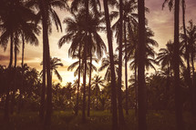 palm tree forest at sunset