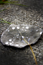 water droplets on a leaf after a spring rain