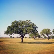 Green tree field