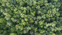 aerial view of trees in a forest.