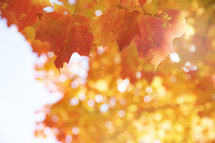 blurry orange leaves