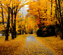 Pathway through fall trees.